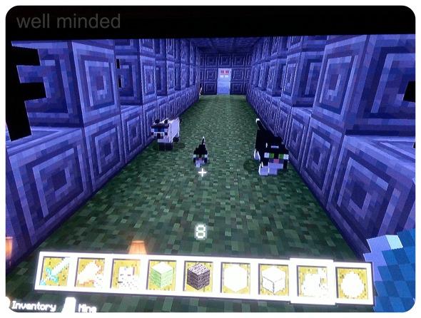 MinecraftCatsInside