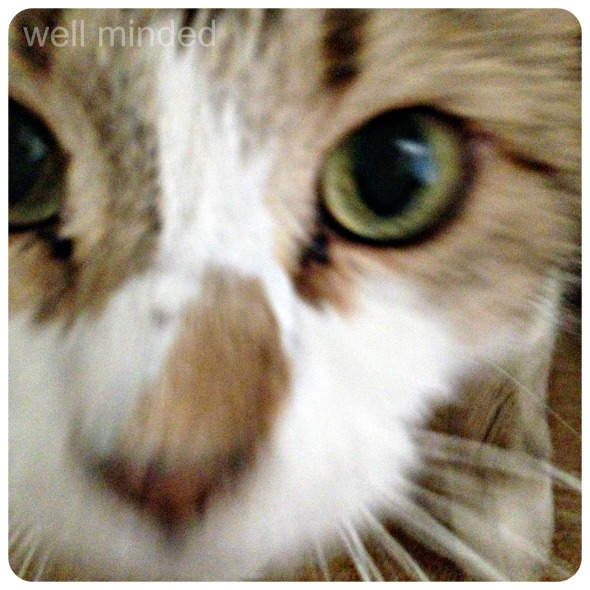 Wordless Wednesday: curiously close-up cat
