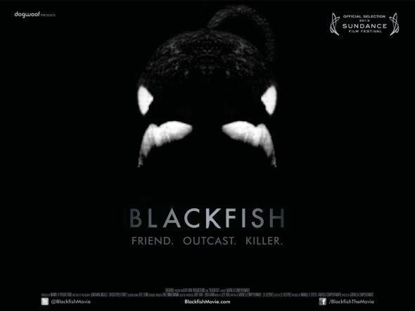 photo source: blackfishmovie.com