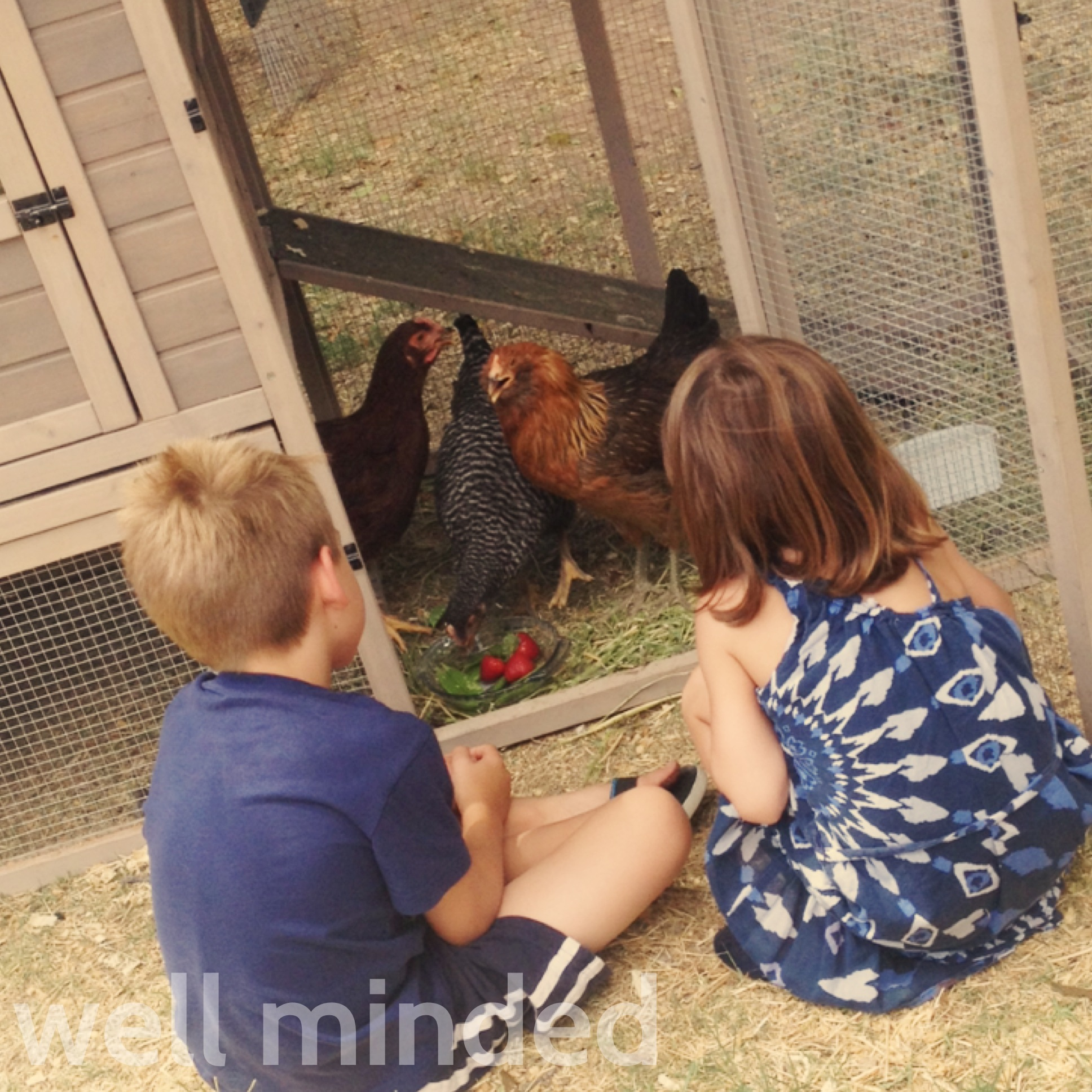natural living with backyard chickens by hybrid rasta mama