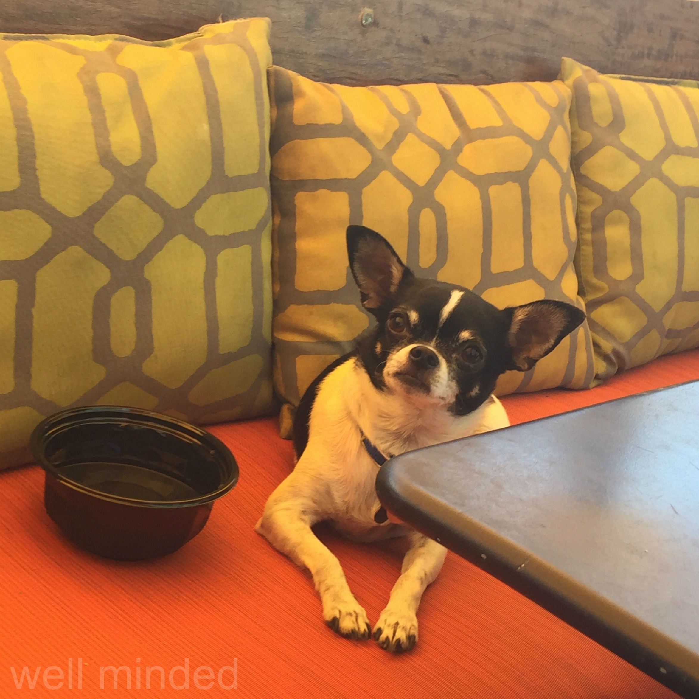 PetFriendlyRestaurant